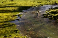 Boxley - Scenic