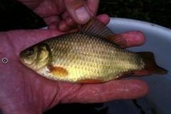 Hinx Hill - Fish